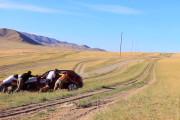 U of A alumni to trek through Europe in Mongol Rally