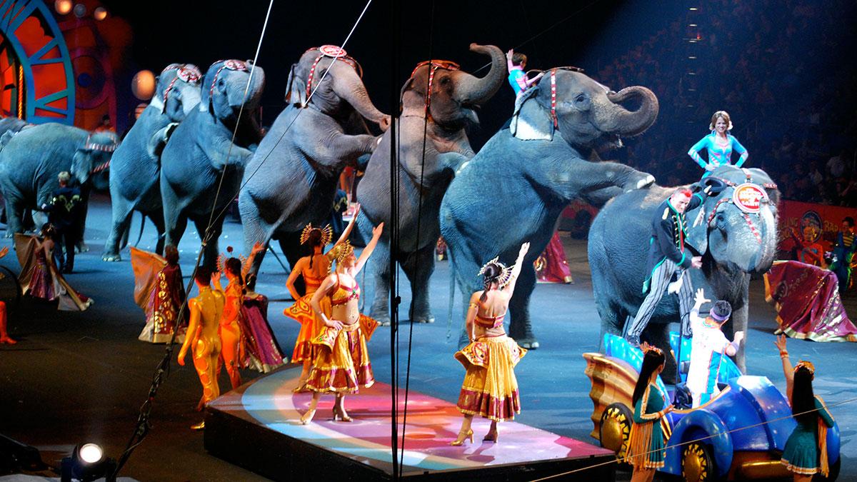Photo of Ringling Bros. retiring performing elephants long overdue