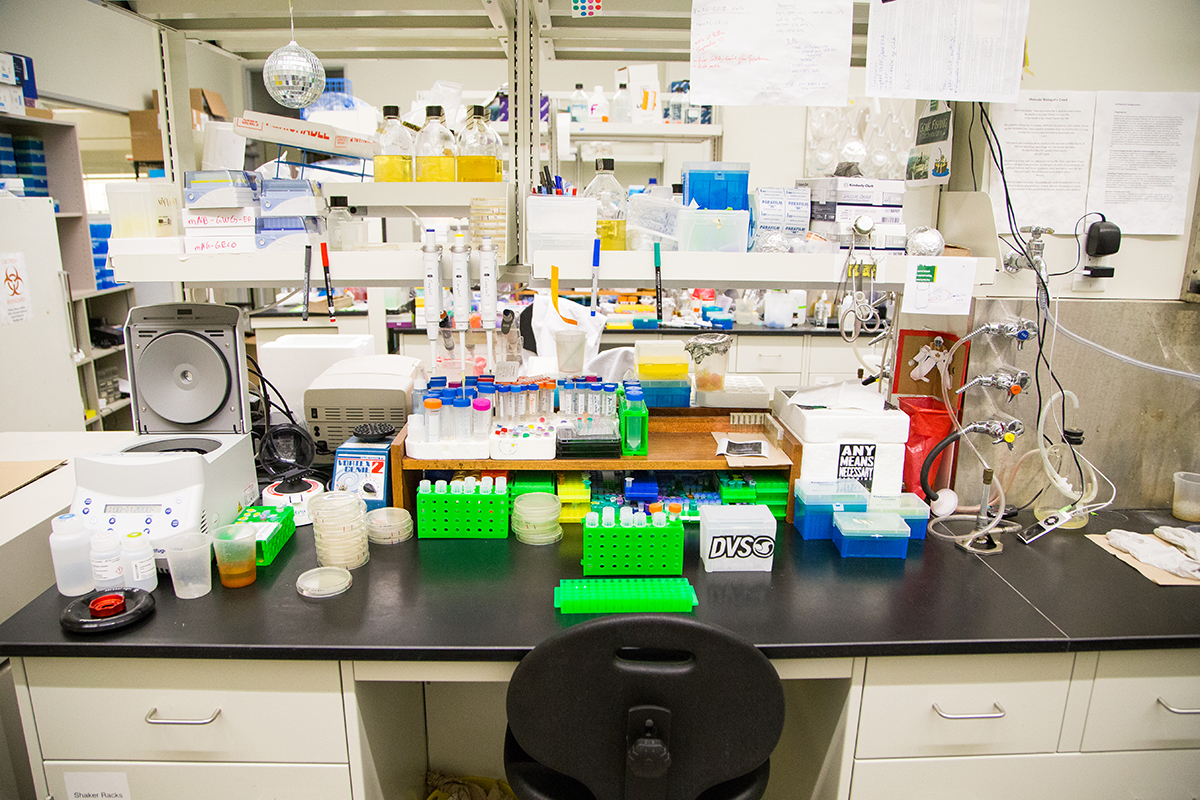 """""""This is the cleanest bench in the lab, I share this bench with a PhD student named Landon, he's a neat freak"""""""