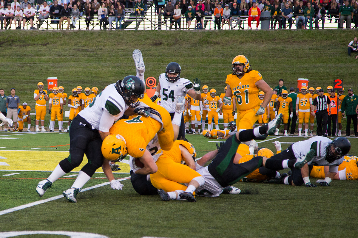 Golden Bears fourth year running back Ed Ilnicki crashes into the Huskies line.