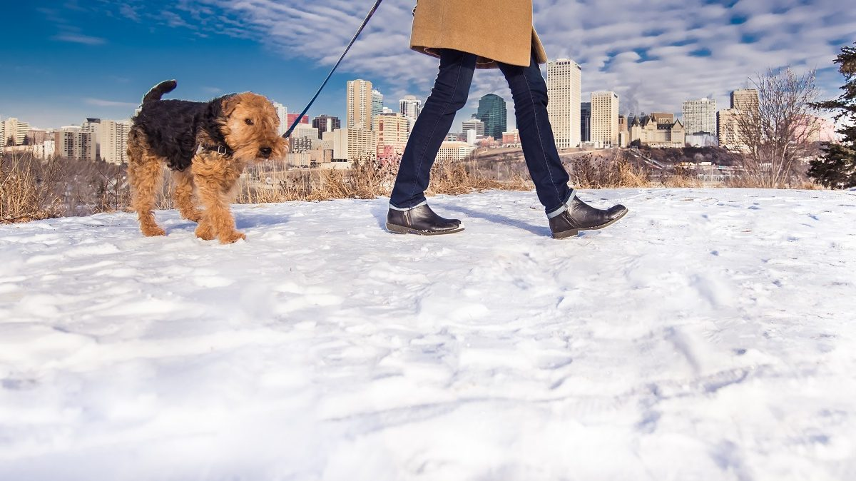 Walkable Edmonton aims to get people's feet moving