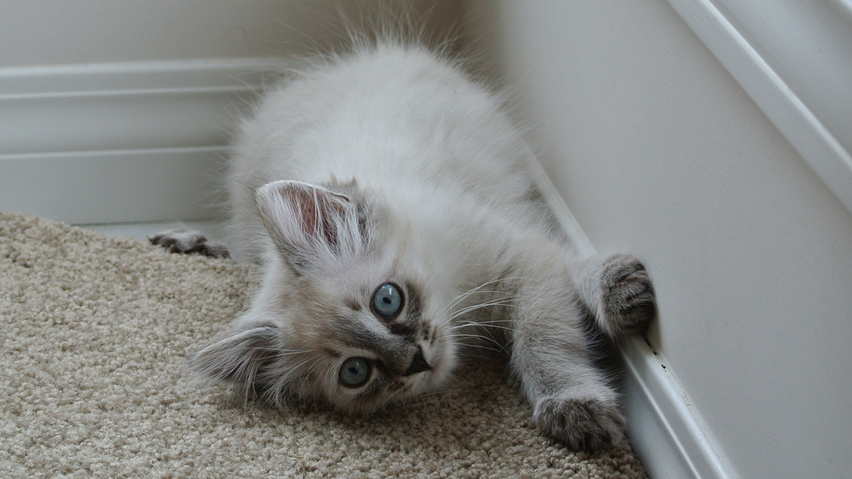 Photo of Stop declawing cats
