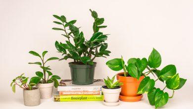 Photo of Top 5: Indoor plants for university students