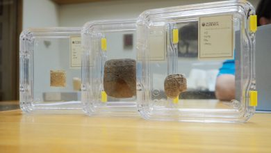 Photo of Four 4,000-year-old tablets make up the oldest item in the U of A's library collection