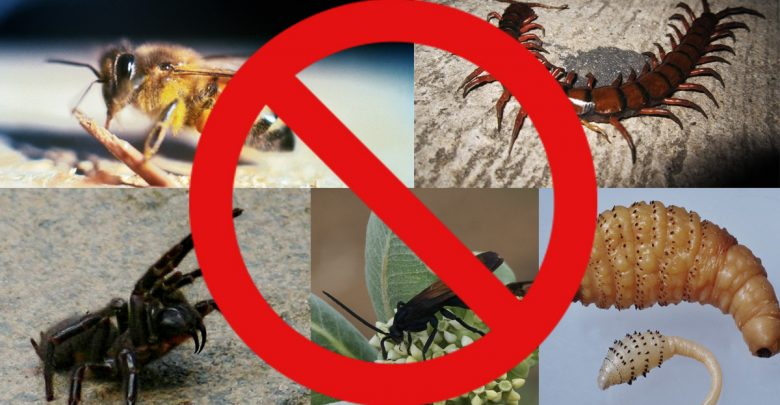 Top 5: Bugs I'm glad don't live in Canada - The Gateway