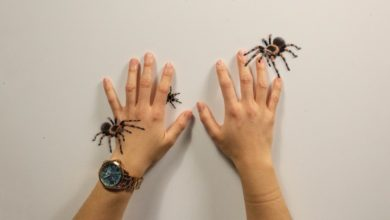 Photo of University of Alberta design student creates augmented reality game to help cure fear of spiders